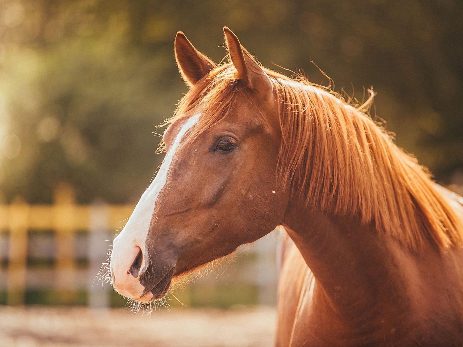 SOAZ-equestrian